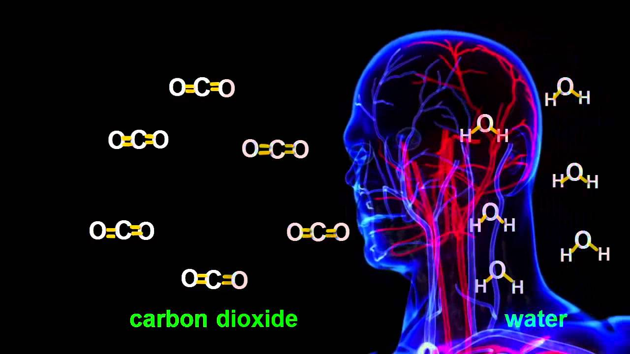 Chemistry Tutorial: Cellular Respiration Chemical Equation image