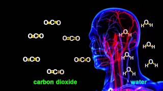 Chemistry Tutorial: Cellular Respiration Chemical Equation
