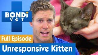 Kitten Arrives Unconscious from Accident  | FULL EPISODE | S08E12 | Bondi Vet