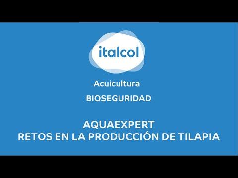 BIOSEGURIDAD - AquaExpert:  Retos En La Producción De Tilapia