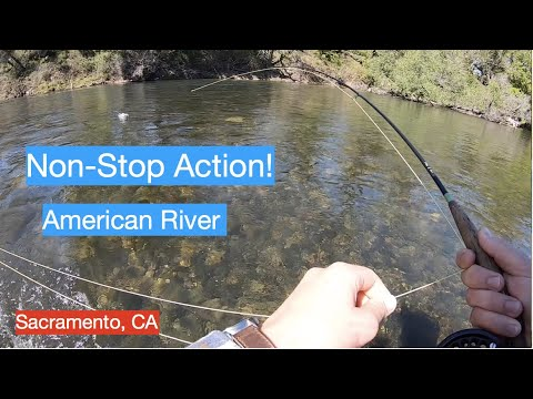 Non-Stop Action RAINBOW TROUT Fly Fishing The American River Sacramento CA