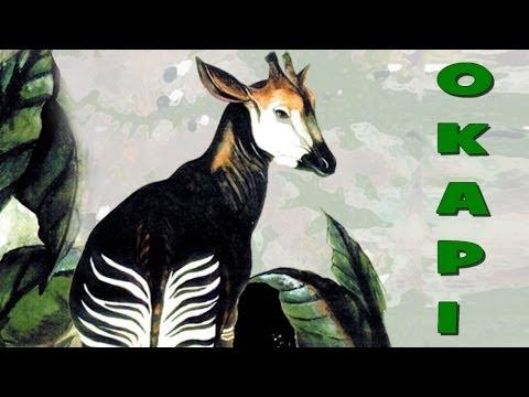 Okapi el antecesor de las Jirafas??