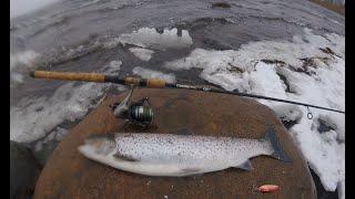 Criminal fishing Ловля кумжи в Финском заливе