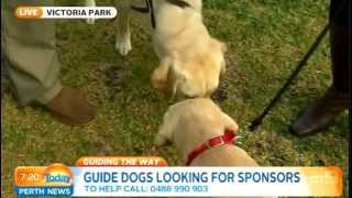 Guide Dogs Wa Part 1 | Today Perth News