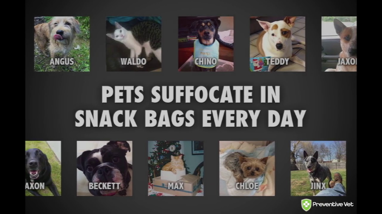National Pet Suffocation Awareness Week – Preventing Heartbreak
