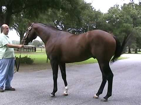 The Green Monkey - $16M Thoroughbred in Florida 2009