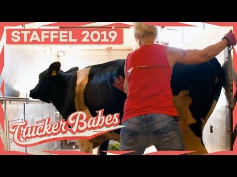 Bettina vs. Kuh: Kuh hat keine Lust auf die Fahrt und zeigt das! | Trucker Babes | Kabel Eins