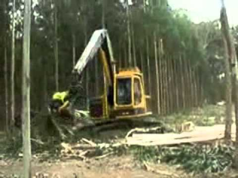 Công nghệ khai thác gỗ