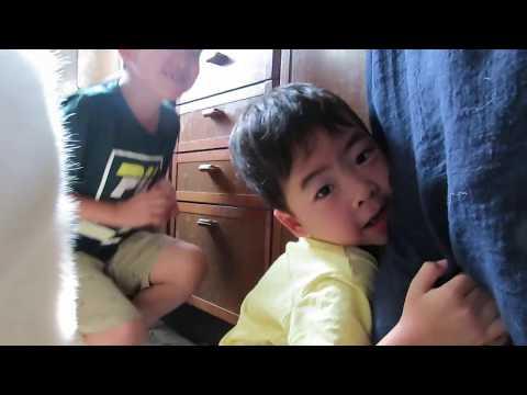 【秋田犬ゆうき】お兄ちゃんが小さな弟とゆうきを仲良くさせようと頑張る【akita dog】