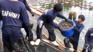 SHRIMP HARVESTING THAILAND