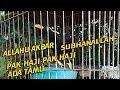 Viral Burung Beo Bicara Allahu Akbar Dan Subhanallah Parrot Talk  Mp3 - Mp4 Download