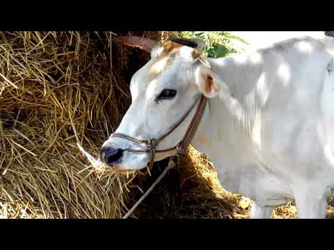 teacher teaching about farming to the students-award winning shortfilm