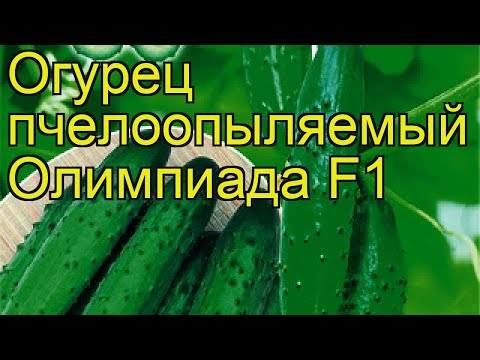 Огурец Олимпиада (Огурец). Краткий обзор, описание характеристик, где купить семена cucumis sativus