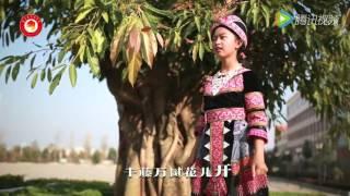 侯也函 Hou Ye Han -  蝴蝶花 Npauj Npaim Ya MV