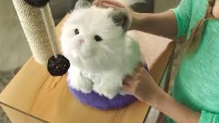 Cobi Little Live Pets Mój Wymarzony Kotek Interaktywna Kicia 28330