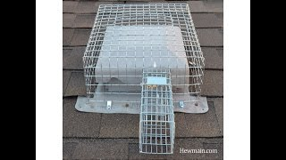 Squirrel Hole Repairs and Mice Exclusion NJ 732-309-4209