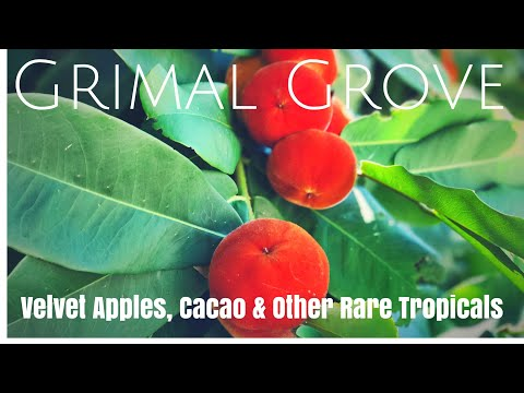Grimal Grove:  Tropical Fruit Origin Stories from a 60+ Year Collection (Part 2)