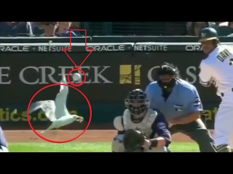 Unexpected Animal Interference Moments in Sports