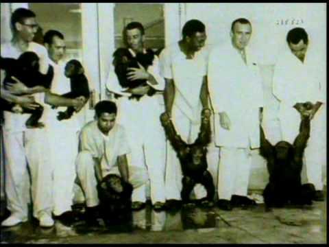 Chimpanzés dans le couloir de la mort - 2/6 - Chimps on death row poster