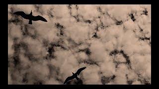 Tino El Pingüino - Sé Que Esperabas La Lluvia (prod. por Mezcalibur, Maxo & Maestro Alex)