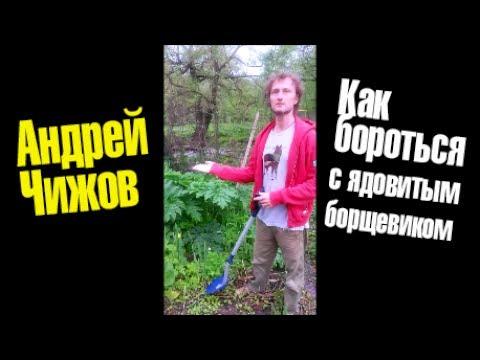 Растения Урала (Фото, описание)