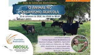 O Animal no Organismo Agrícola com Paulo Cabrera [CONVERSAS BIODINÂMICAS]