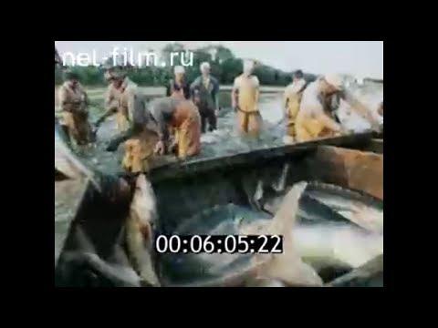 1989г. тоня Мужичья, 9- я Огневка. колхоз Волга Икрянинский район Астраханская обл