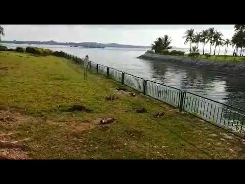 Otters sun-bathing at Pasir Ris Park Singapore after swim