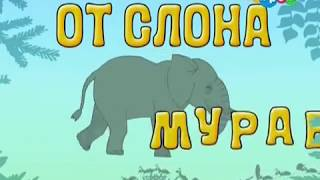 От слона до муравья. 13  Зоопарк. Образовательное видео для детей от Хрюши.