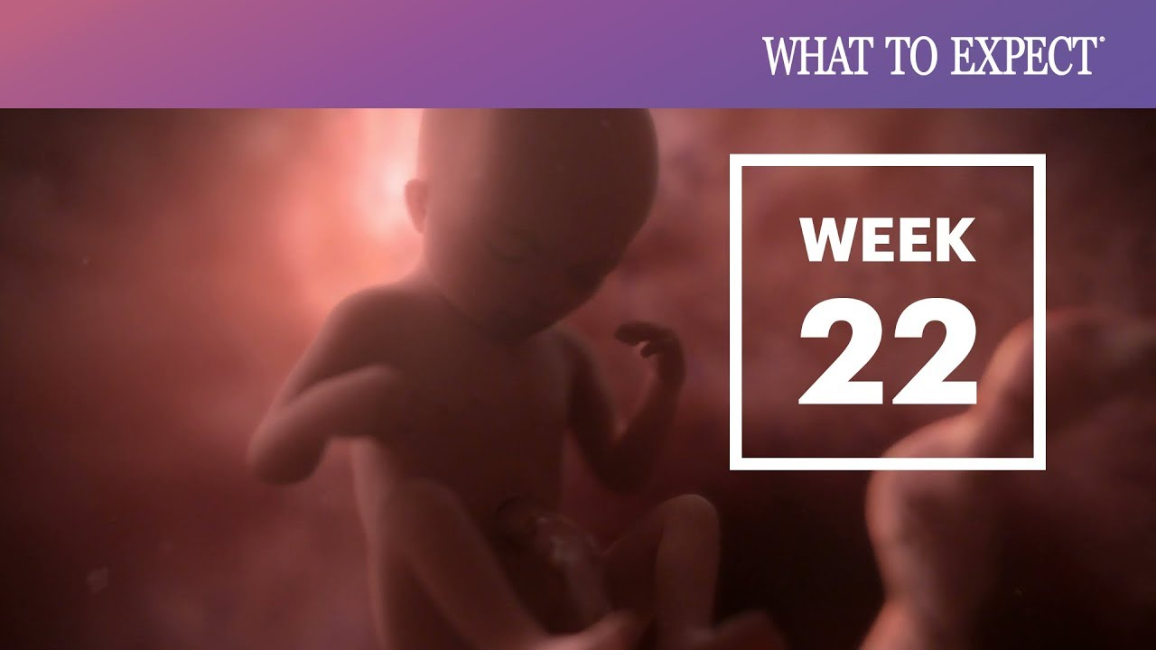 22 Weeks Pregnant | What To Expect