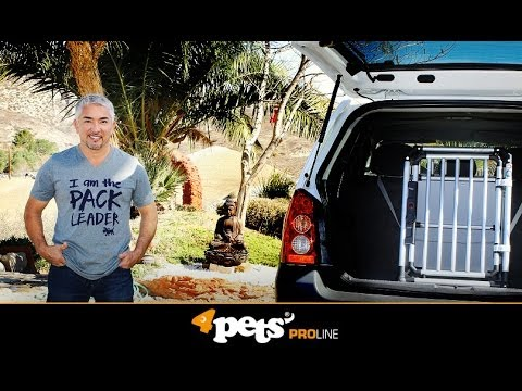 Cesar Millan and Junior recommend the 4pets ProLine dog-boxes.