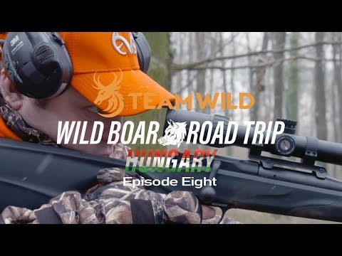 Wild Boar Hunting: Driven Hunting in Hungary