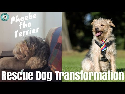 Amazing Rescue Dog Transformation - Fluffy Tufts