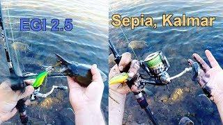 Tintenfisch Sepia Kalmar vom Ufer am Meer angeln