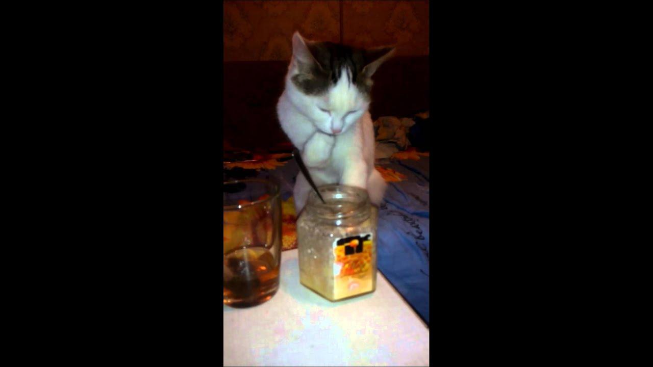 Кот ест мед