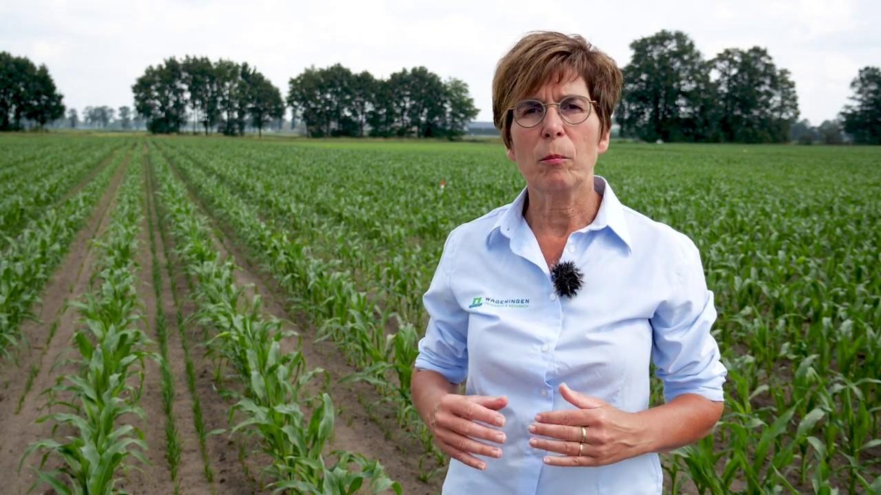 Keuze van een vanggewas na mais - Brigitte Kroonen - WUR