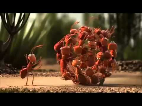 Animated short films - Solidarity of animals - funny video