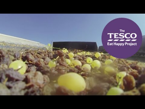 See how grapes are dried to become raisins, ready to buy in the shops