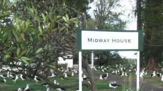 15 Reasons to Love Midway Atoll
