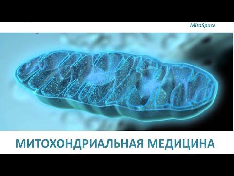 Митохондриальная медицина. Ольга Борисова.
