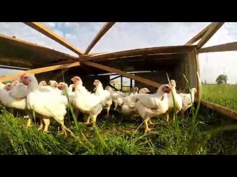 Introducing VG Meats' Pasture Raised Chicken