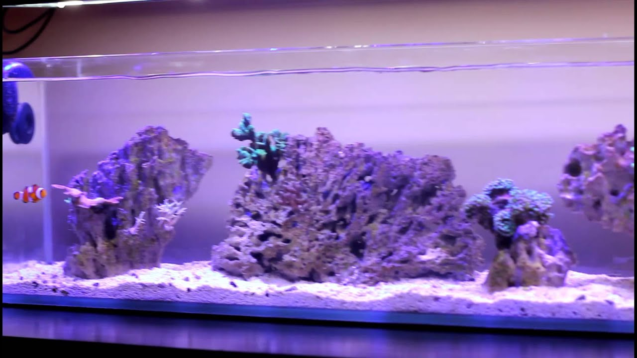 Mr Aqua 12 Gallon Long Nano Day 47 Youtube