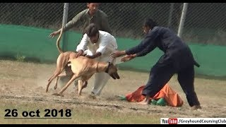 Gambar cover greyhound trials held at rajpur coursing club 2019 season Part 1