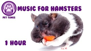 Music for Hamsters! Relax Your Hamster and Help Your Hamster Sleep with Soothing Music