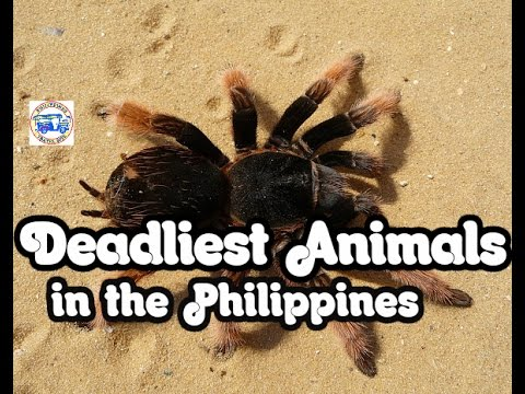 Deadliest Animals in the Philippines