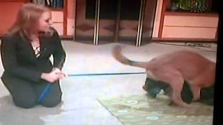 dogs get frisky on kwqc hd6 morning news
