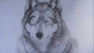 Drawing of a Gray Wolf.wmv