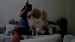 Hund schützt Kind vor schlägen der Mama