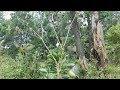 Pikat Burung Kecil Di Alam Liar Menggunakan Suara Ampuh  Mp3 - Mp4 Download