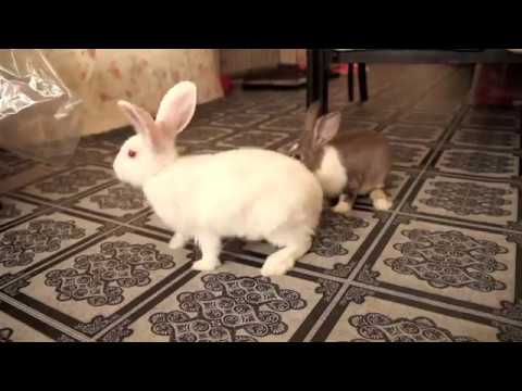 PET101 - 5 SIMPLE WAYS ON HOW TO BOND WITH YOUR BUNNY!